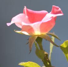 20110802_42 -1