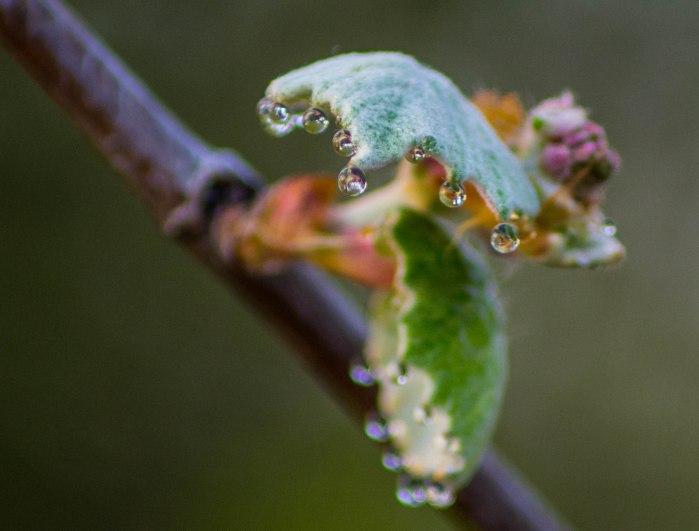 Houston Arboritum-1-3