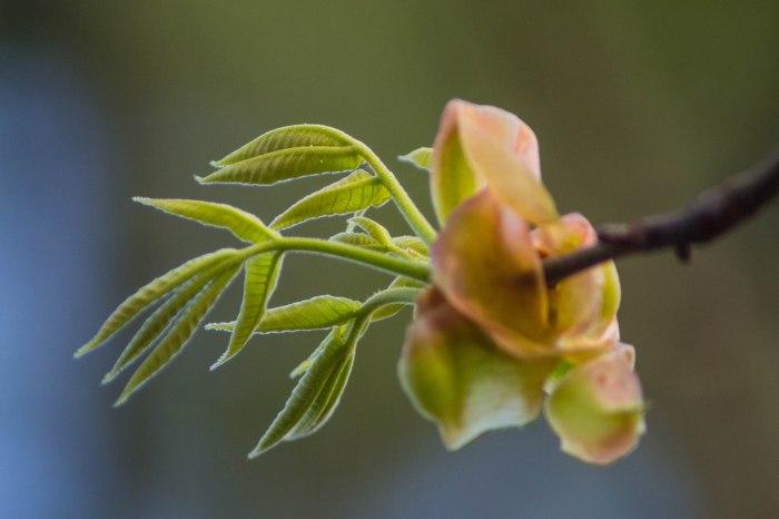 Houston Arboritum-1-7