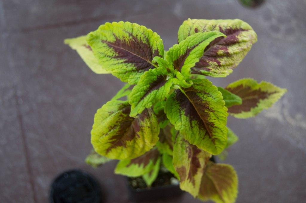 Patio plant