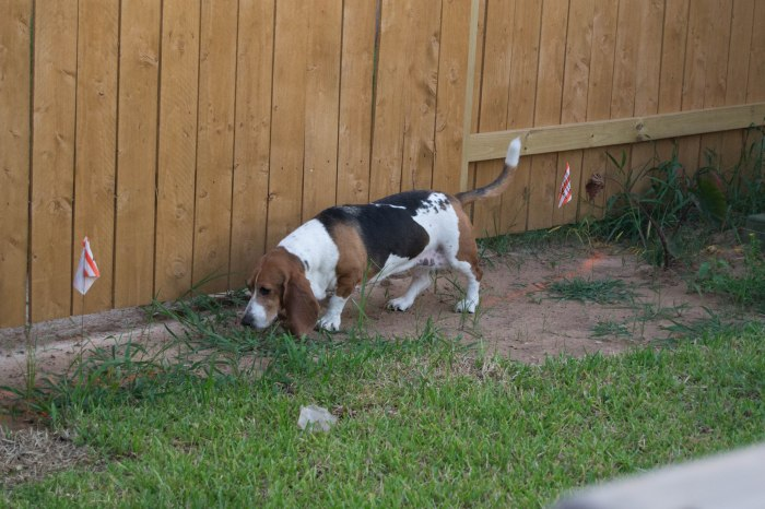 Freda checking the fence line